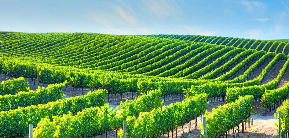 Napa Valley, California, Top 10 Soul Searching Destinations of the World, TraveLibro Travel Blog