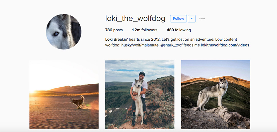 Loki The Wolfdog, 10 Unique Travel Instagram Accounts to Follow | TraveLibro Travel Blog