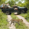 TraveLibro South Africa Kruger National Park featured city Game Drives - KNP