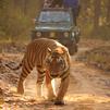 TraveLibro India Kanha National Park featured city Honeymoon Safari