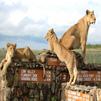 TraveLibro Kenya Nairobi Exotic  Kenya