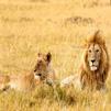 TraveLibro India Gir National Park Jaisalmer featured city test