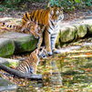 TraveLibro India Jim Corbett National Park Kausani Naini Tal featured city nainital-kasauni-corbett