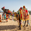 TraveLibro India Pushkar featured city Pushkar - A Hindu Quadrant