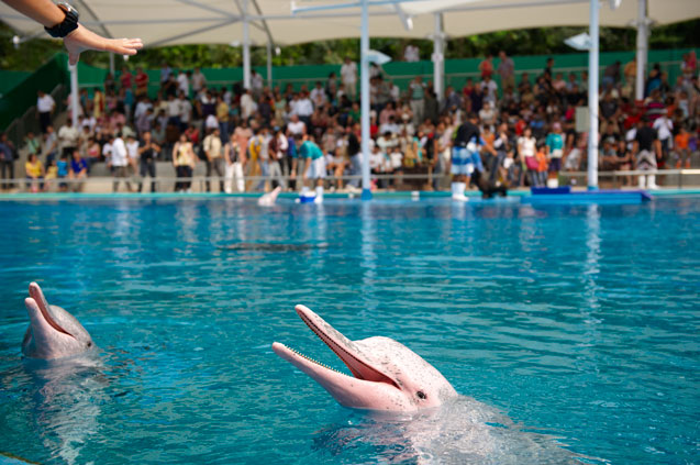 Pink dolphin show uw singapore tourism board