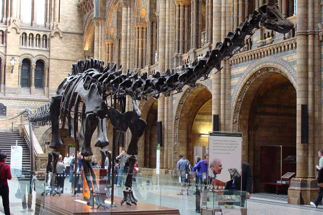 4 natural history museum drow male wikimedia commons