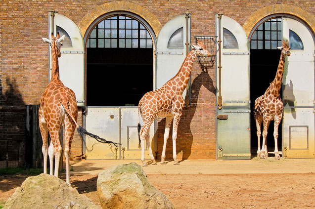 travelibro United Kingdom Blackpool Cumbria Edinburgh Glasgow London Torquay UK Family London Zoo