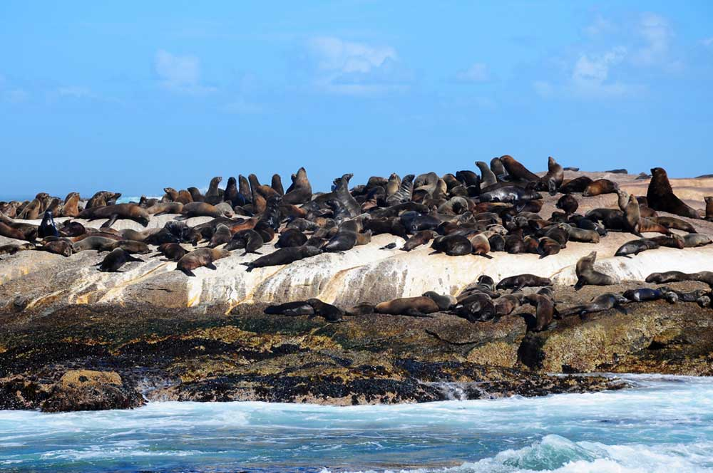 travelibro South Africa Cape Town The Cape Town Experience Seals at Hout Bay