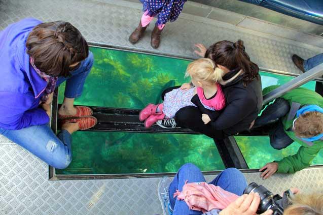 travelibro New Zealand Auckland Christchurch Franz Josef Queenstown Rotorua Taupo Wanaka Wellington Whitianga NZ Honeymoon Glass Bottom Boat Ride