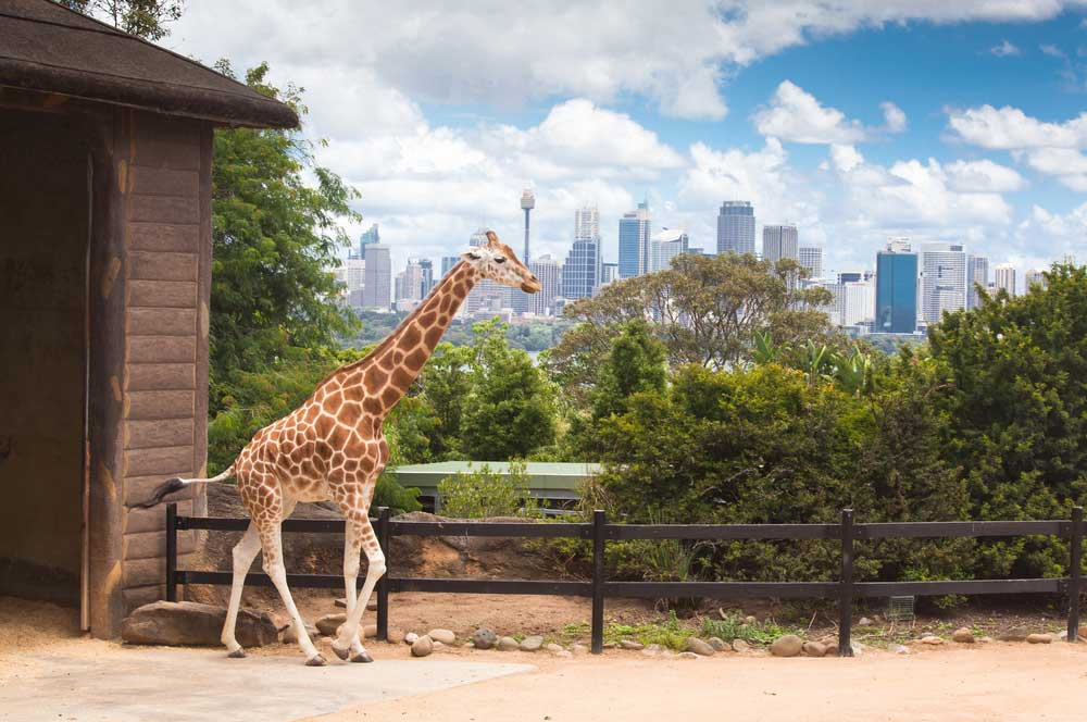 travelibro Australia Blue Mountains Cairns Daylesford Gold Coast Hamilton Island Melbourne Perth Pokolbin Sydney Yallingup Australia Honeymoon Taronga Zoo