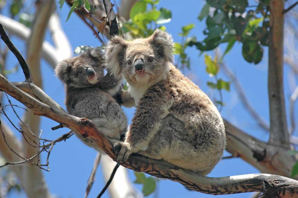 travelibro Australia Adelaide Cradle Mountain Daydream Island Gold Coast Kangaroo Island Melbourne Sydney Australia Family Melbourne Zoo