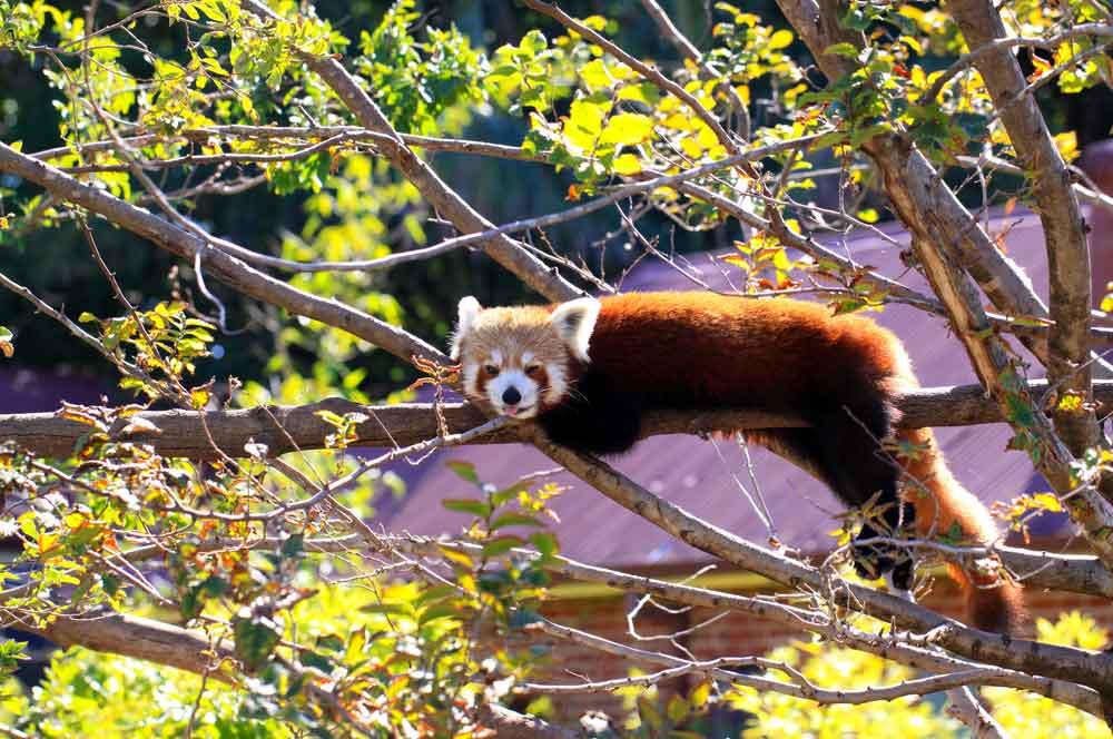 travelibro Australia Adelaide Brisbane Broome Darwin Gold Coast Melbourne Perth Sydney Whitsundays Australia Backpacking Adelaide Zoo
