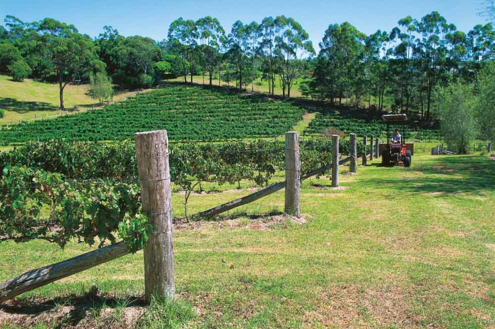 travelibro Australia Blue Mountains Cairns Daylesford Gold Coast Hamilton Island Melbourne Perth Pokolbin Sydney Yallingup Australia Honeymoon Cedar Creek Estate Vineyard & Winery