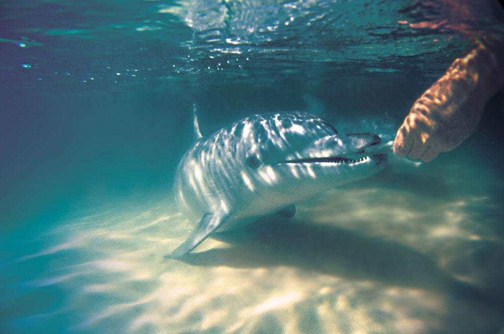 travelibro Australia Adelaide Brisbane Broome Darwin Gold Coast Melbourne Perth Sydney Whitsundays Australia Backpacking Tangalooma Wild Dolphin Resort