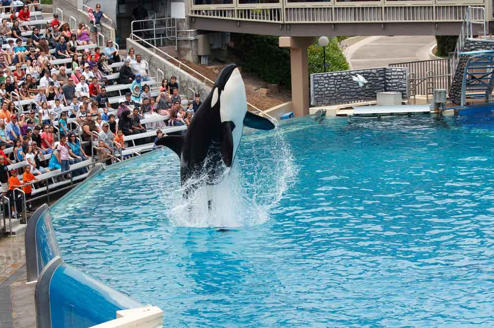 6.sea world  san diego roka via shutterstock