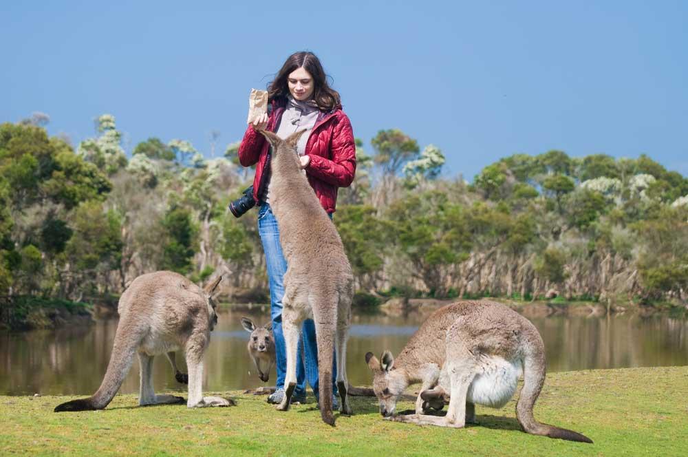 travelibro Australia Adelaide Cradle Mountain Daydream Island Gold Coast Kangaroo Island Melbourne Sydney Australia Family Kangaroo Island Wildlife Park