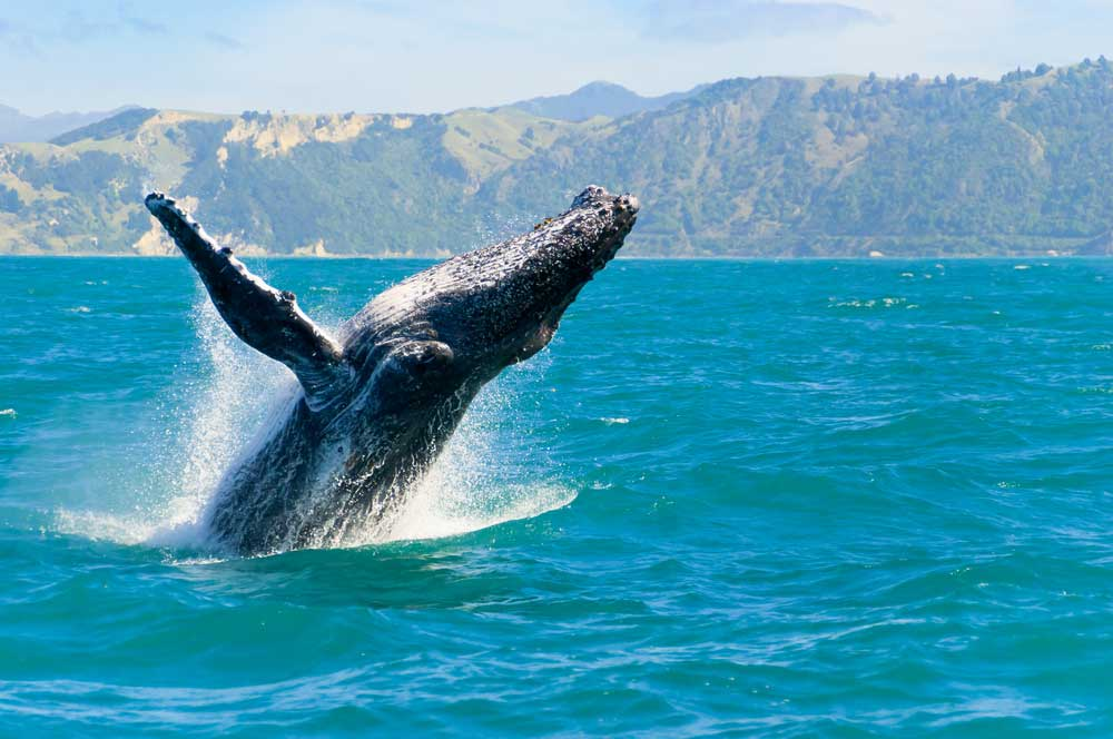 New zealand whale watching tour