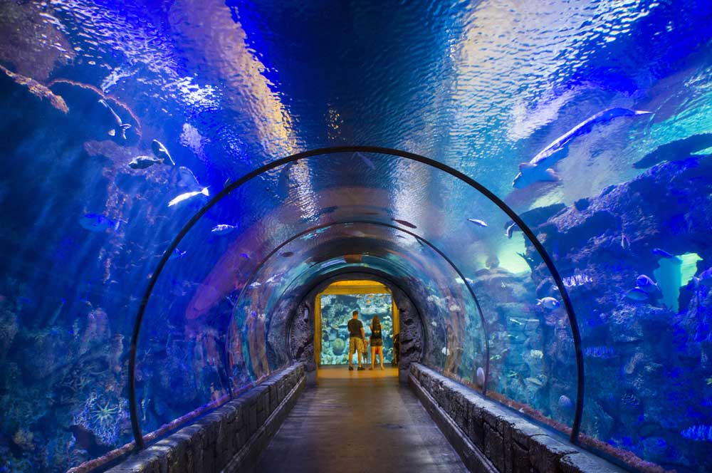 Shark reef aquarium kobby dagan  shutterstock