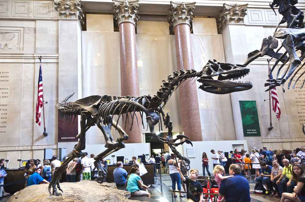 travelibro United States of America Austin Buffalo Chicago Las Vegas Los Angeles New Orleans New York San Francisco USA Budget American Museum of Natural History