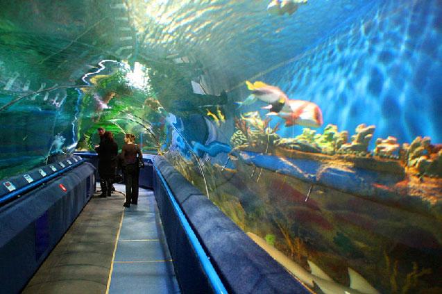 travelibro Russia Moscow St. Petersburg Russia Luxury Oceanarium