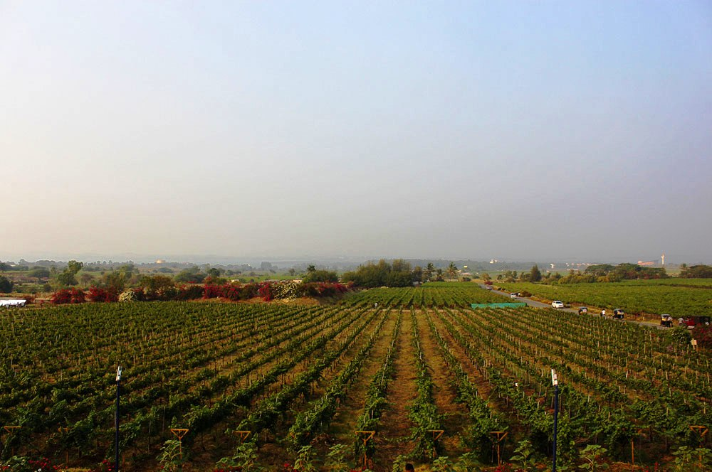 Sula vineyards bom elroy serrao via flickr