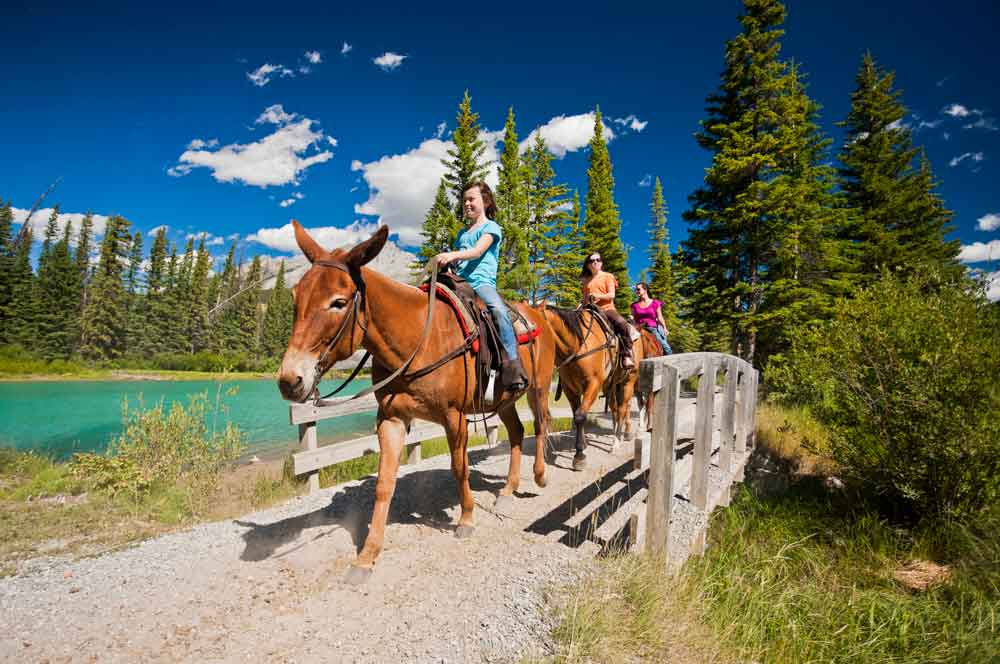 26.spray river horseback trail therealbanff