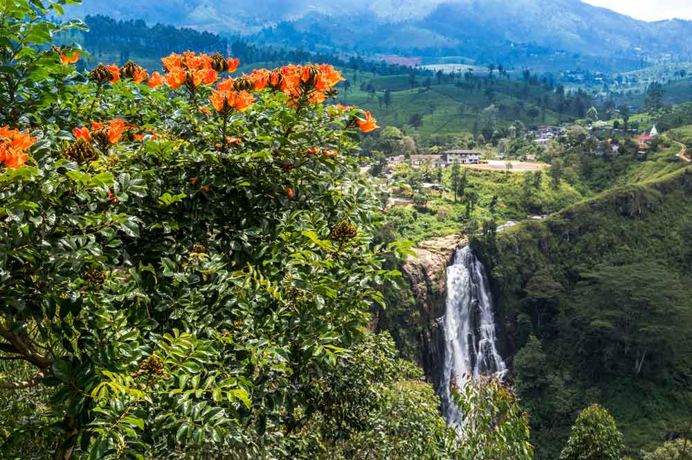 travelibro Sri Lanka Bentota Colombo Kandy Nuwara Eliya Sri Lanka Budget Devon Falls