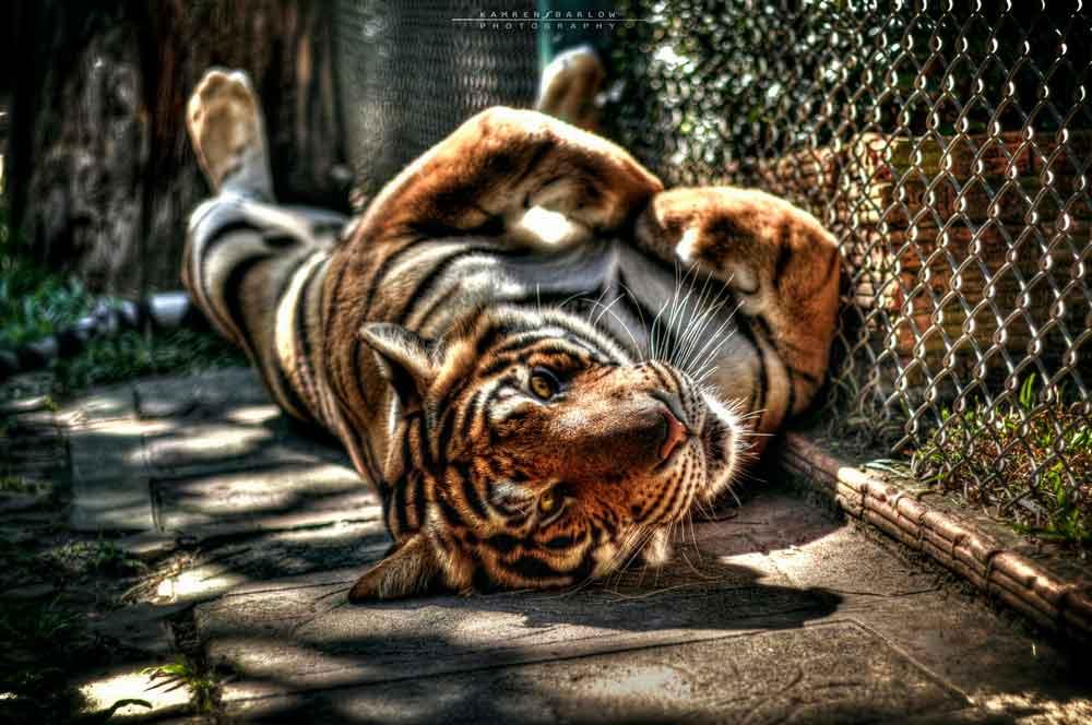 travelibro Thailand Bangkok Chiang Mai Hua Hin Ko Samui Pattaya Phuket Thailand Backpacking Tiger Kingdom