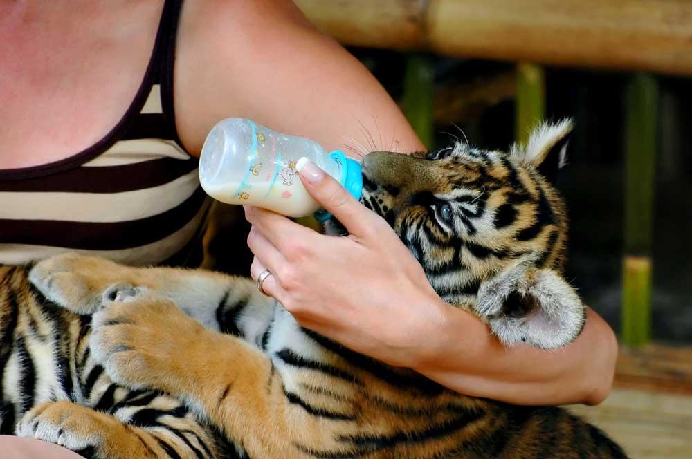 travelibro Thailand Bangkok Chiang Mai Hua Hin Ko Samui Pattaya Phuket Thailand Backpacking Samui Aquarium & Tiger Zoo