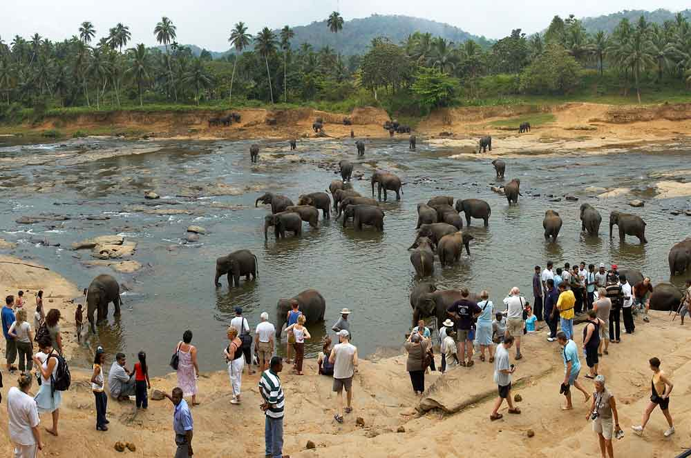 32 pinnawala elephant orphanage wouter hagens wikimedia commons