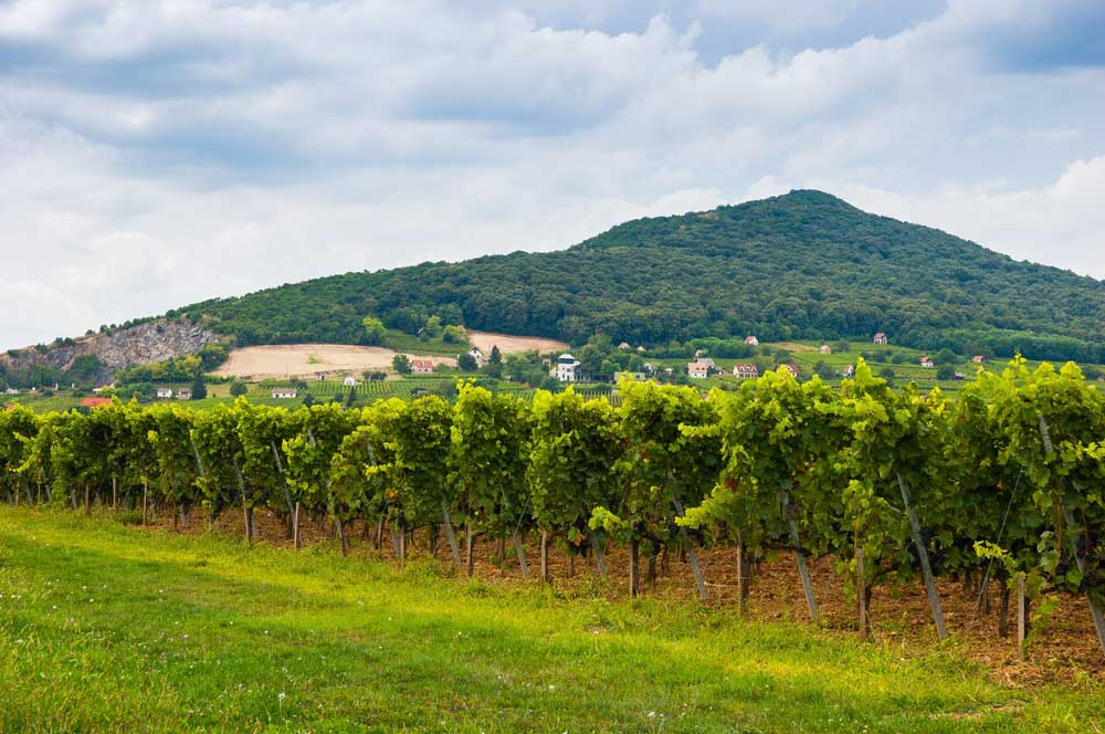 travelibro Hungary Budapest Pecs Siofok Hungary with Kids Villány Wine Region