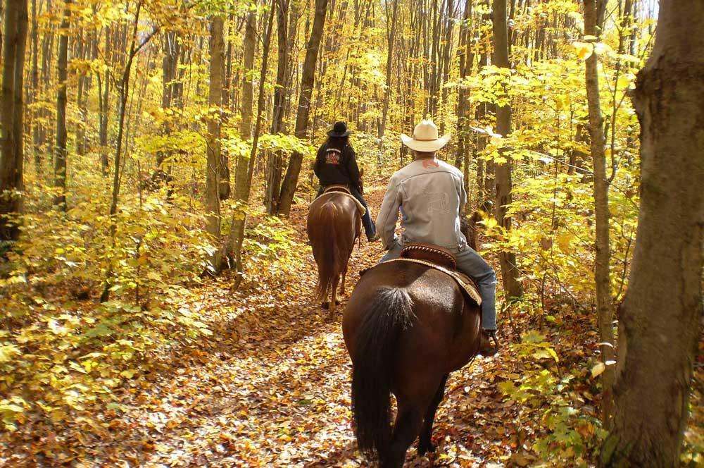 travelibro Hungary Budapest Heviz Lillafured Pecs Sarvar Siofok Visegrad Honeymoon in Hungary Horseback Riding