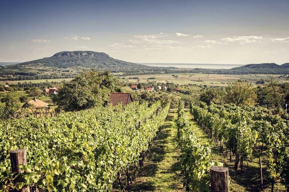 travelibro Hungary Budapest Heviz Lillafured Pecs Sarvar Siofok Visegrad Honeymoon in Hungary Vineyards of Badacsony