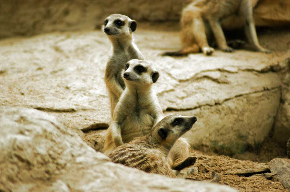 travelibro Thailand Bangkok Bangkok with Family Dusit Zoo