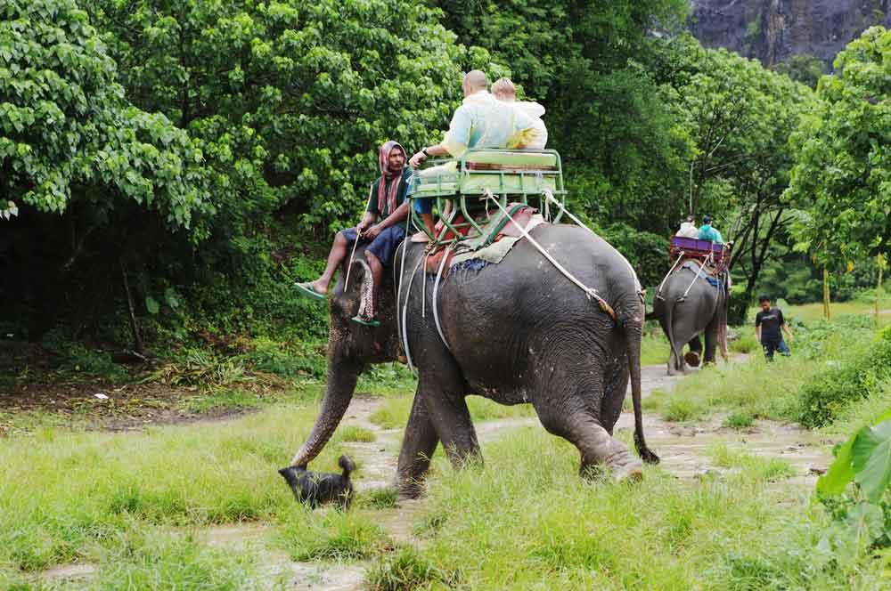 travelibro Thailand Bangkok Chiang Mai Hua Hin Ko Samui Pattaya Phuket Thailand Backpacking Elephant Trekking