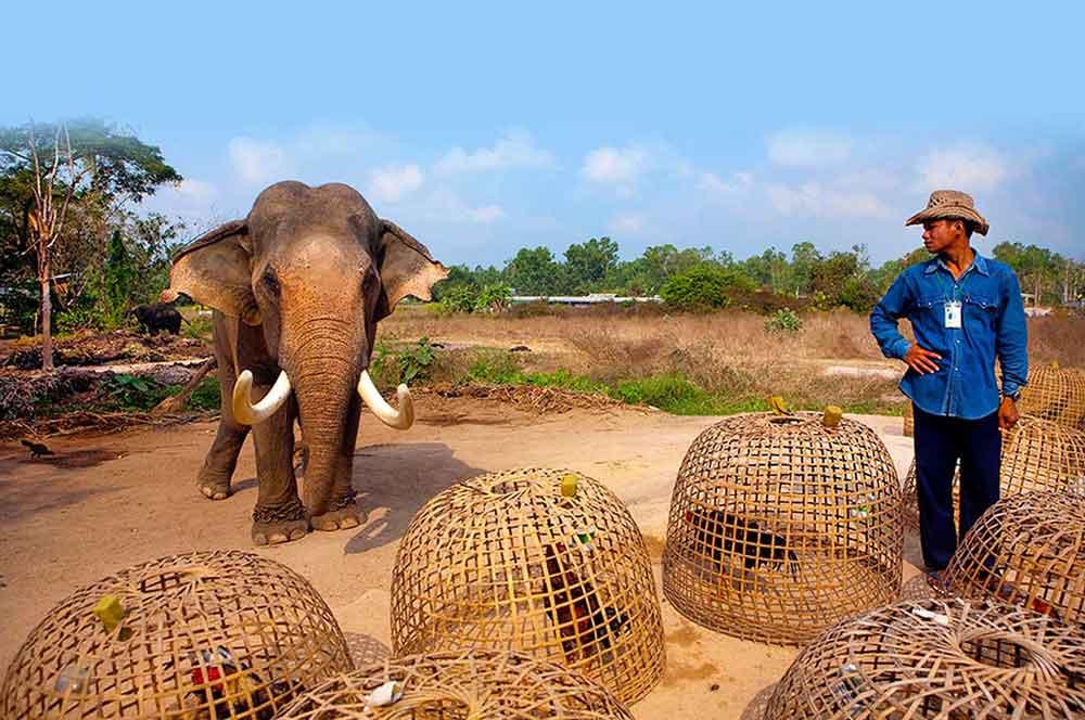 travelibro Thailand Pattaya 3 Days in Pattaya Pattaya Elephant Village