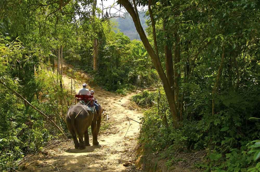 travelibro Thailand Phuket Relax in Phuket Elephant Trekking