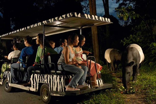 Night safari singapore tourism board
