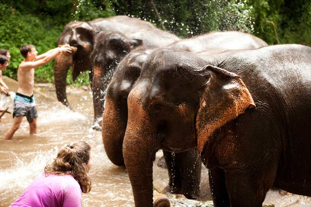 travelibro Thailand Bangkok Chiang Mai Hua Hin Ko Samui Pattaya Phuket Thailand Backpacking Patara Elephant Farm