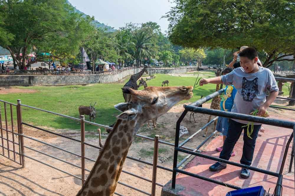 travelibro Thailand Bangkok Chiang Mai Hua Hin Ko Samui Pattaya Phuket Thailand Backpacking Khao Kheow Open Zoo