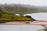 Flamingos at arusha national park   kyle taylor via wikimedia commons