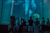 Two oceans aquarium capetown diriye amey via flikr