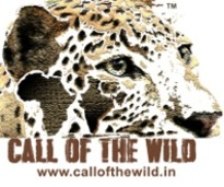 Call of the wild logo %28jpeg%29